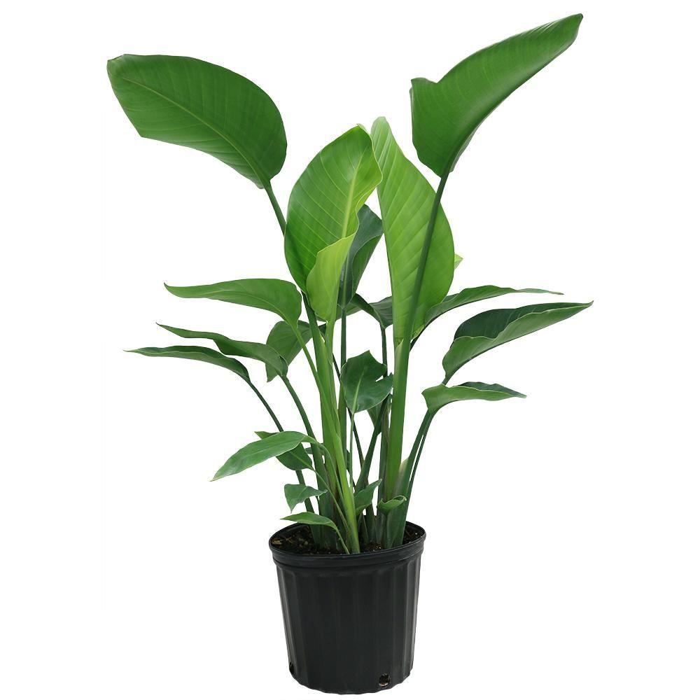 Zz Plant Decor