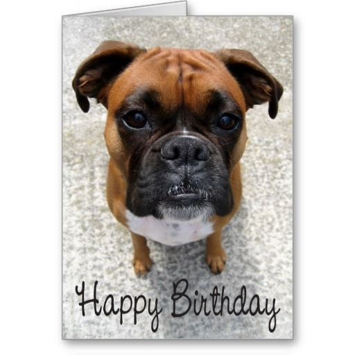 Boxer Puppy Dog Happy Birthday Card Verse Zazzle Com With