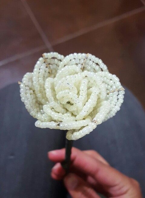 Flor. Rosa. San valentin. Amor.