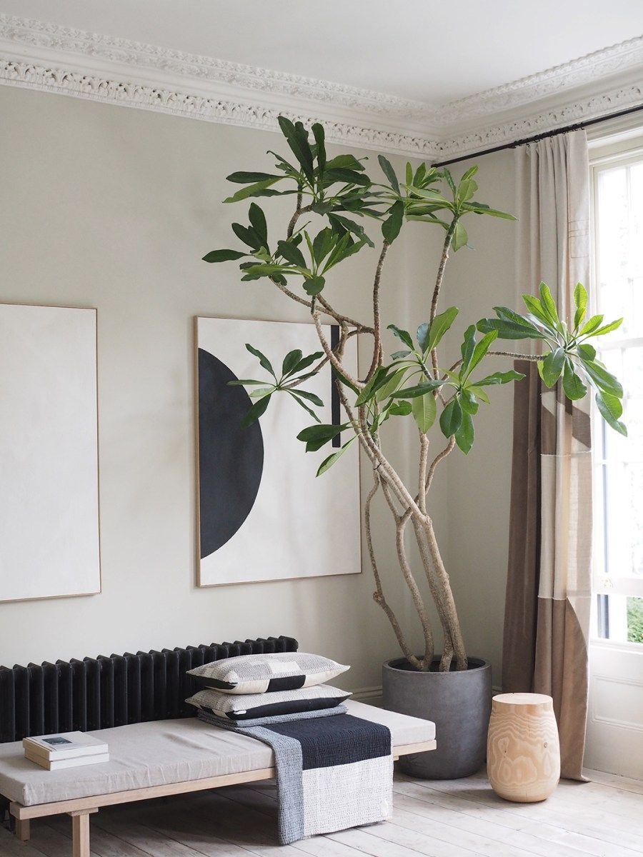 Soft minimalism - neutral decor - bringing the outdoors in. In the neighbourhood: two elegant, minimal London homes - catesthill.com