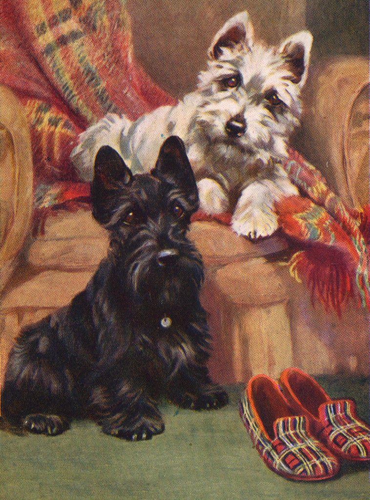 Scottish Terrier Charming Scottie, Westie And Slippers Dog