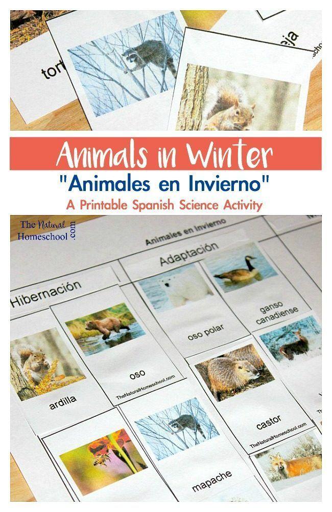 Animals in Winter Which Animals Migrate, Adapt