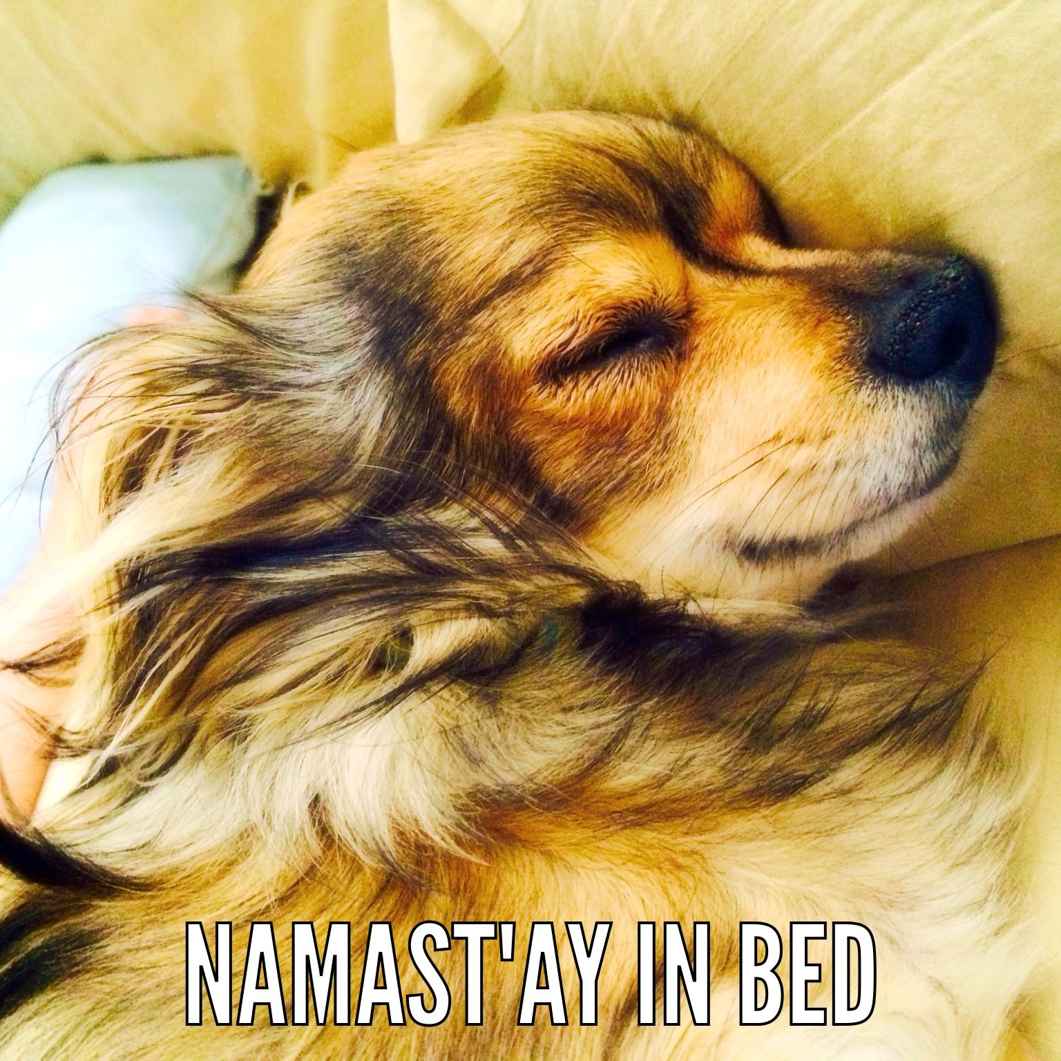 Typical Monday Morning Zen Moment Namaste Dogs Pets Funny