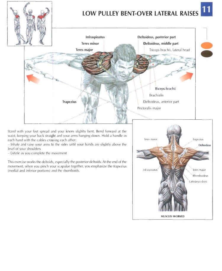Low Pulley Bent Over Lateral Raises Training Anatomy Shoulders