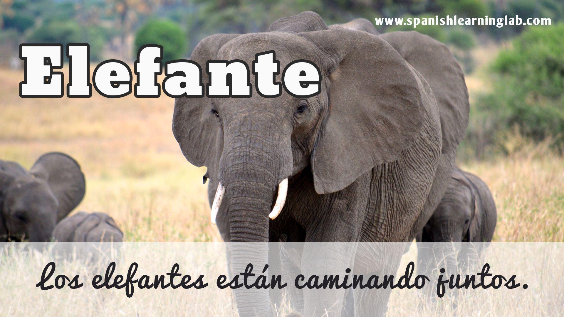 Los Elefantes Estan Caminando Juntos