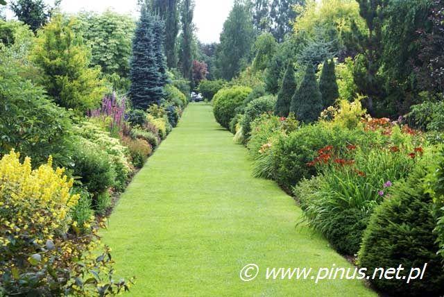 Drzewa I Krzewy Ozdobne Ogrody Rosliny Kwiaty Ogrodowe Iglaki Byliny Sprzedaz I Doradztwo Garden Paths Garden Outdoor