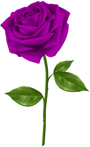 Pin By Rajeev Khaneja On Dia Das Maes Ii Rose Flower Png Flower Background Images Flower Images