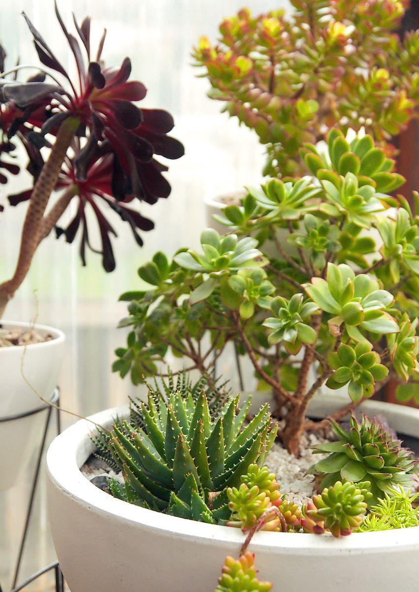 Houseplants 101 All About Succulents Plante Jardin Plantes