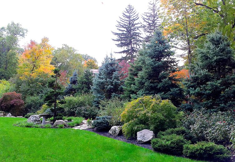 Naturalized Privacy Google Search On A Much Smaller Scale Love The Different Text Evergreen Landscape Front Yard Evergreen Landscape Privacy Landscaping