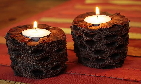 australian banksia nuts candle holders