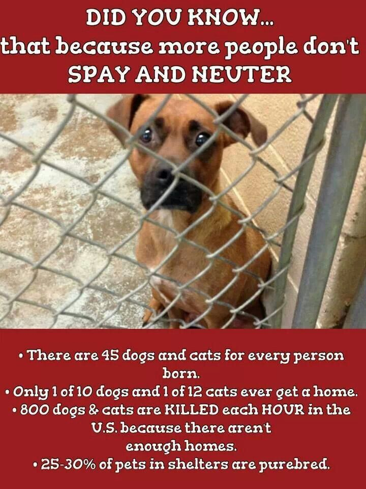 Pin By Humane Society Of Midland Coun On Pups Spay Neuter Pet Health
