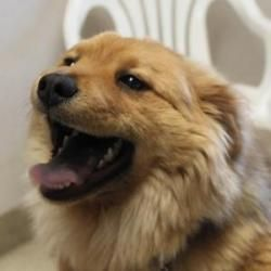 Adopt Parker On Chow Chow Dogs Dogs Animal Shelter