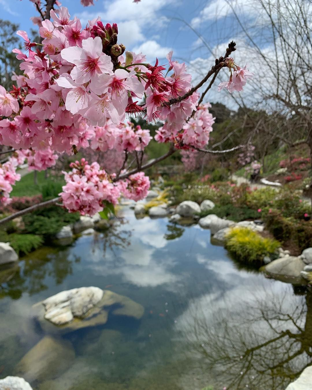 Watch The Best Youtube Videos Online And Spring Blossoms You To Me Cherryblossom Cherryblossom Cherry Blossom Festival Spring Blossom Blossom