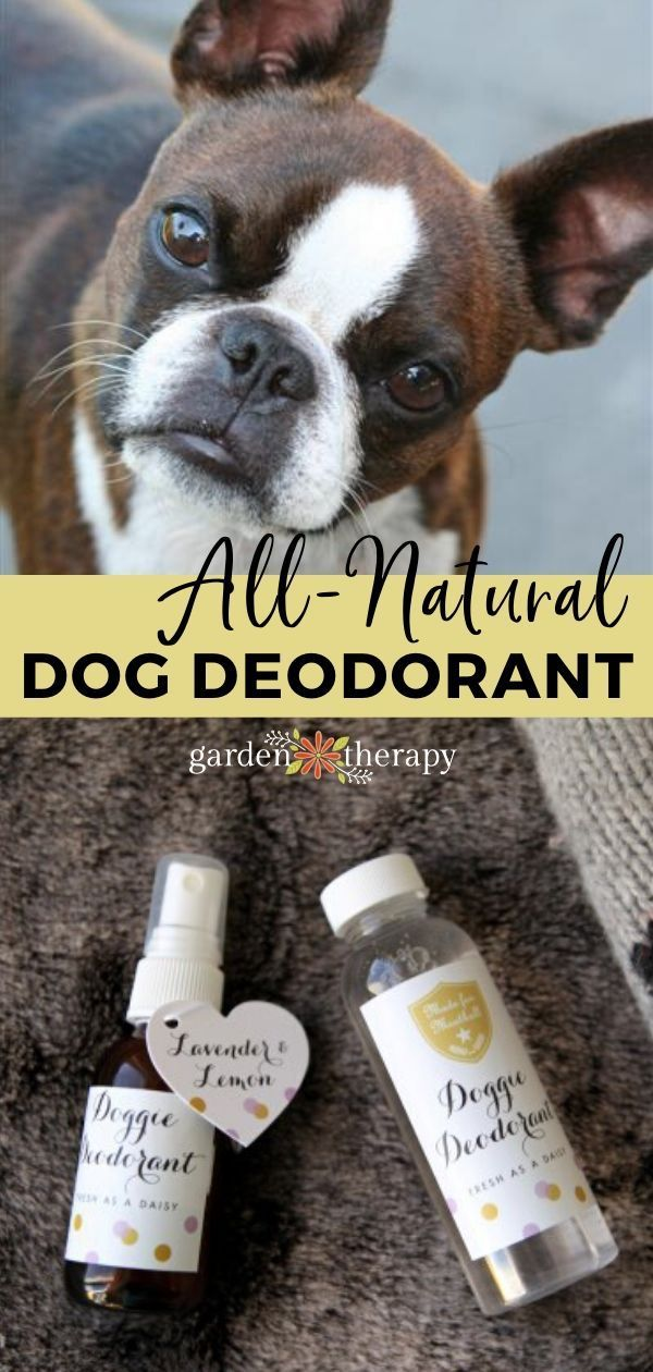 All-Natural Dog Deodorant Spray - Garden Therapy in 2020 ...