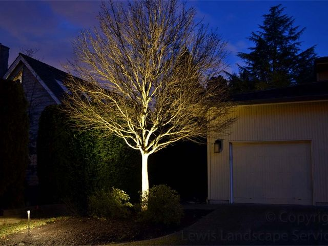 Tree Uplighting Landscape Lighting