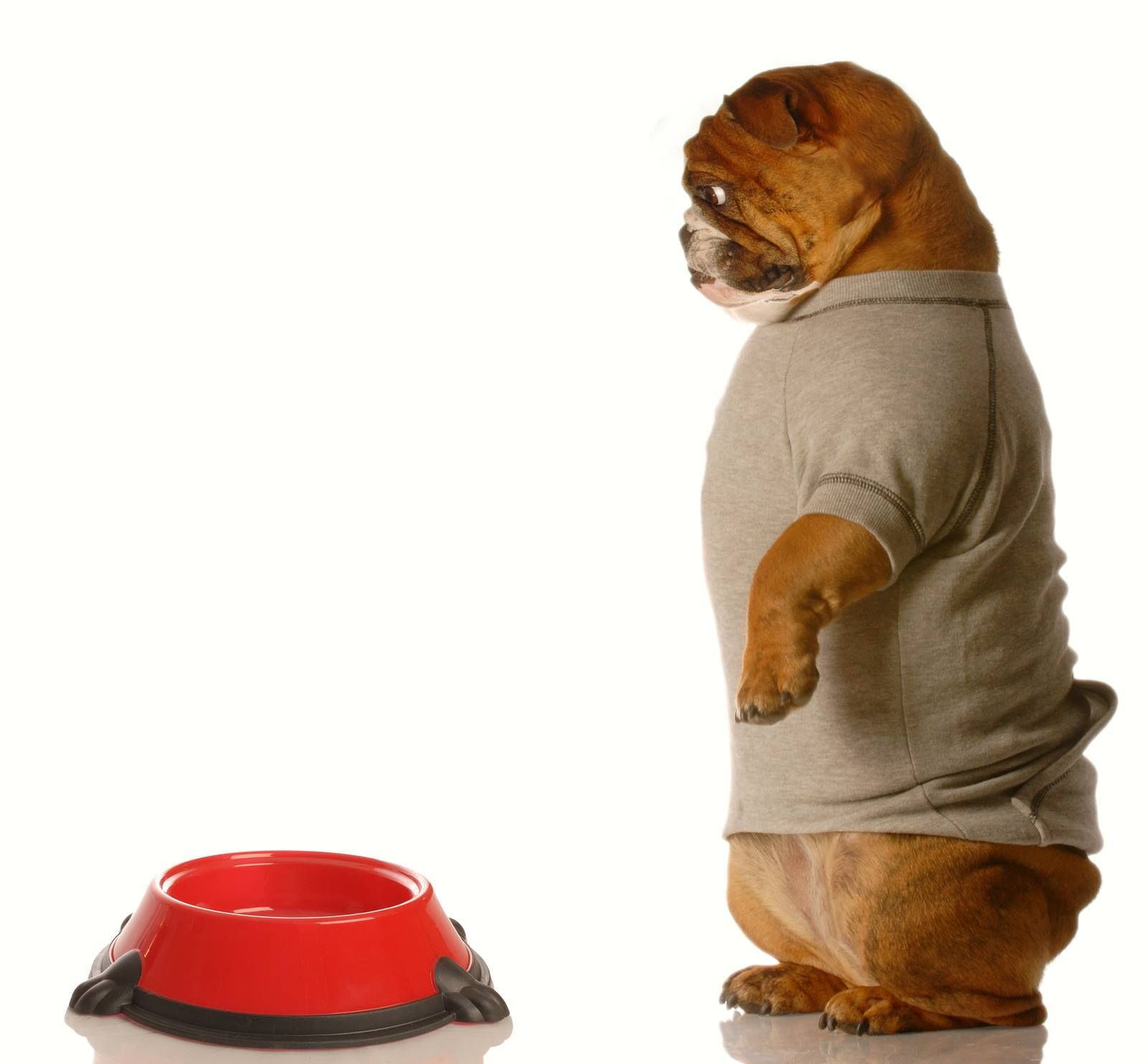 Best Dry Dog Food For English Bulldog Puppy References
