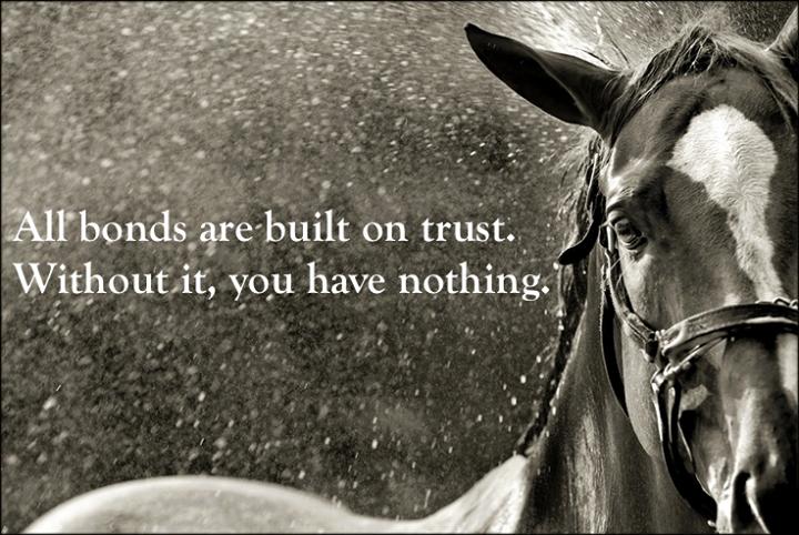 trust #horse #bestfriend   horses   Horse quotes, Horses ...