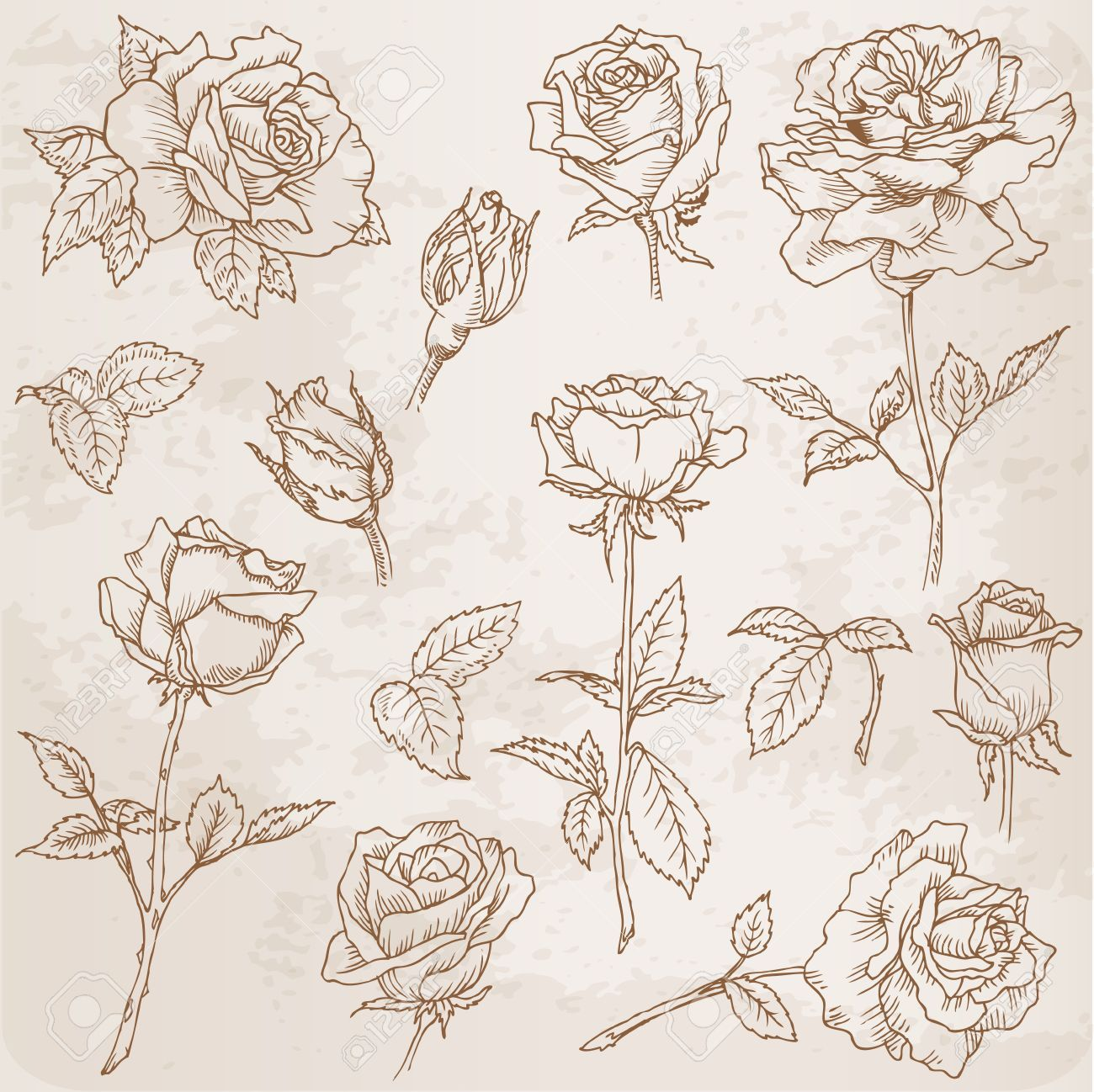 Flower set detailed hand drawn roses in vector royalty free