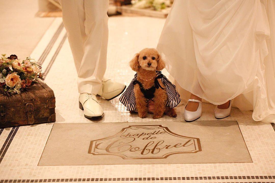 リングドックだけじゃない ペット参加型の結婚式演出11選 結婚式準備はウェディングニュース 結婚式 ペット ペット ドック