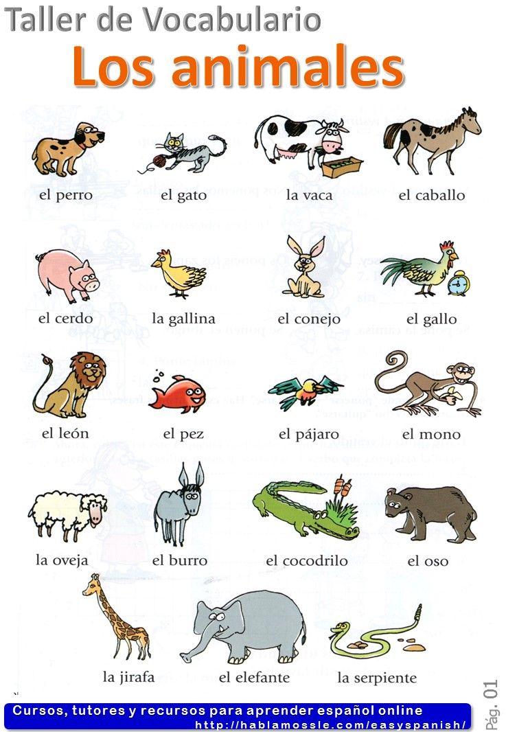 Animals in Spanish Los animales Spanish vocabulary A1