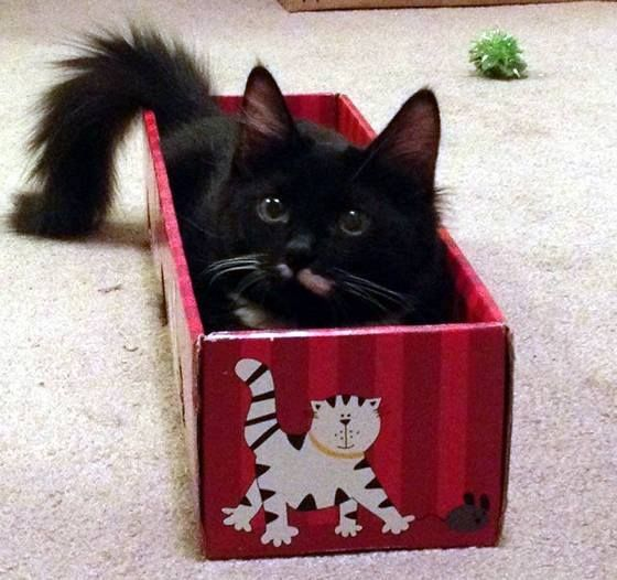 Her own special box!