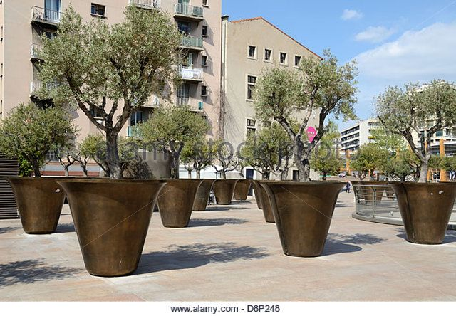 giant planters or flower pots olive trees near the town. Black Bedroom Furniture Sets. Home Design Ideas