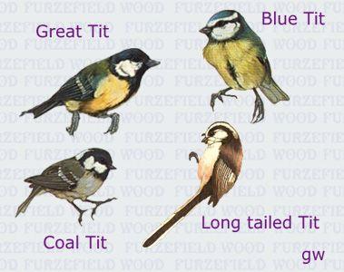 Bird called tit