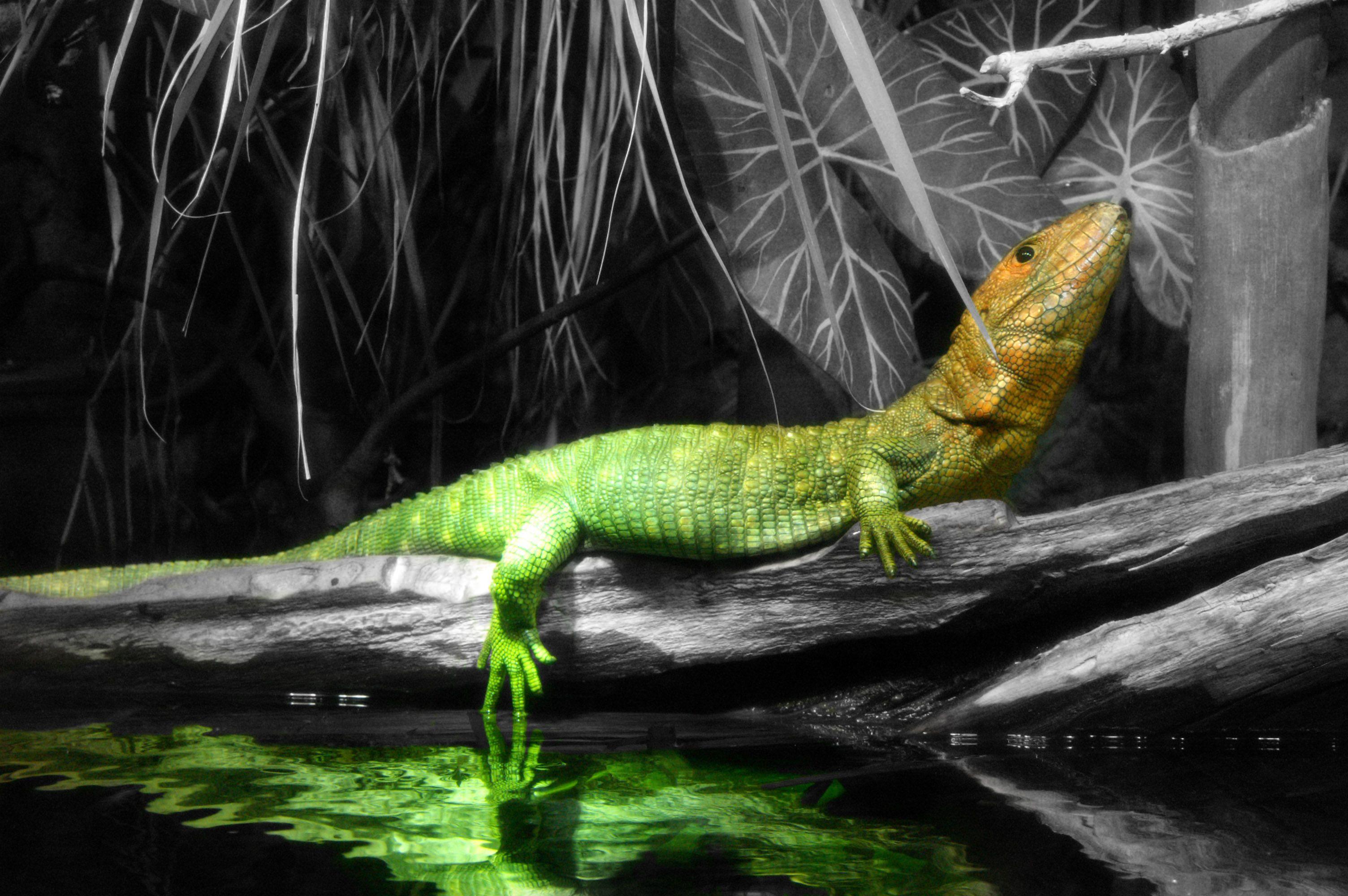 Color Splash By Supcowpur On DeviantArt