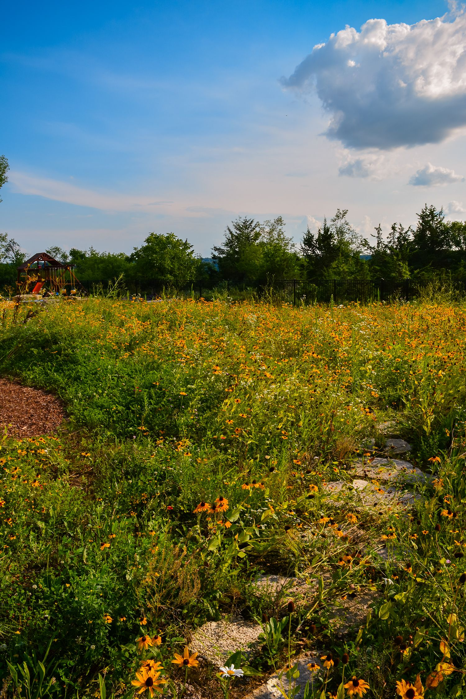 McKay Nursery landscape project. Wildflower garden, stepping stones ...