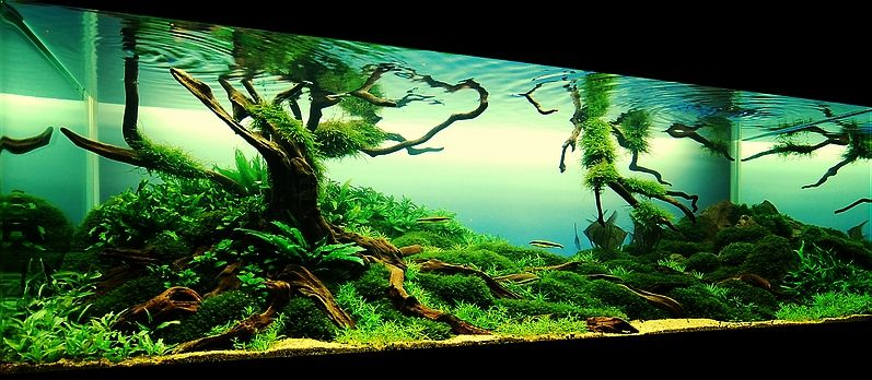 Aquascaping - fish tank on Pinterest | Aquascaping ...