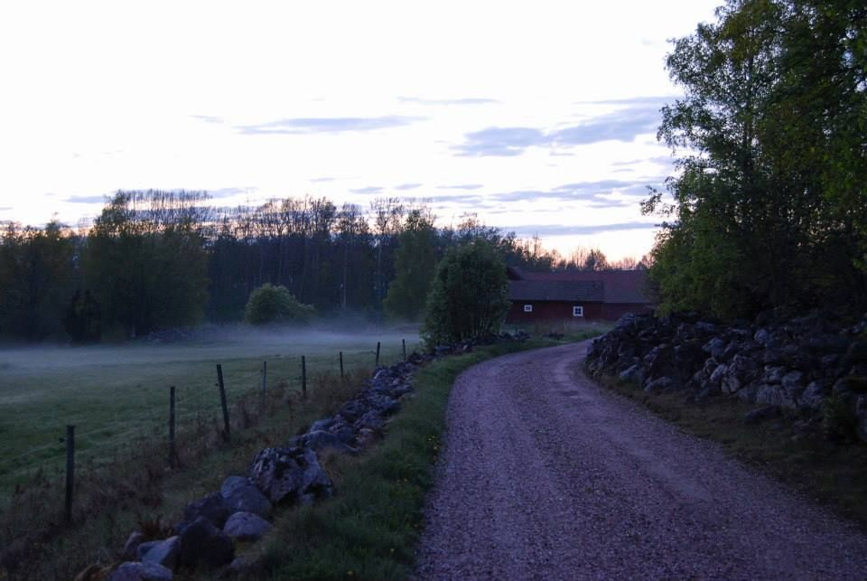 Spring evening in Sweden. The fairies are dancing in the fog.