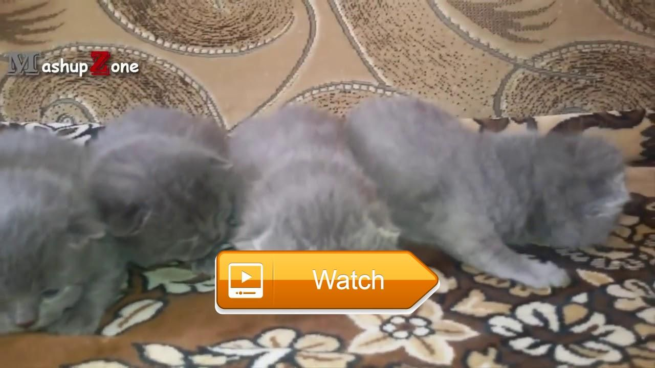 Kittens Meowing A Cats Meowing pilation [CUTE