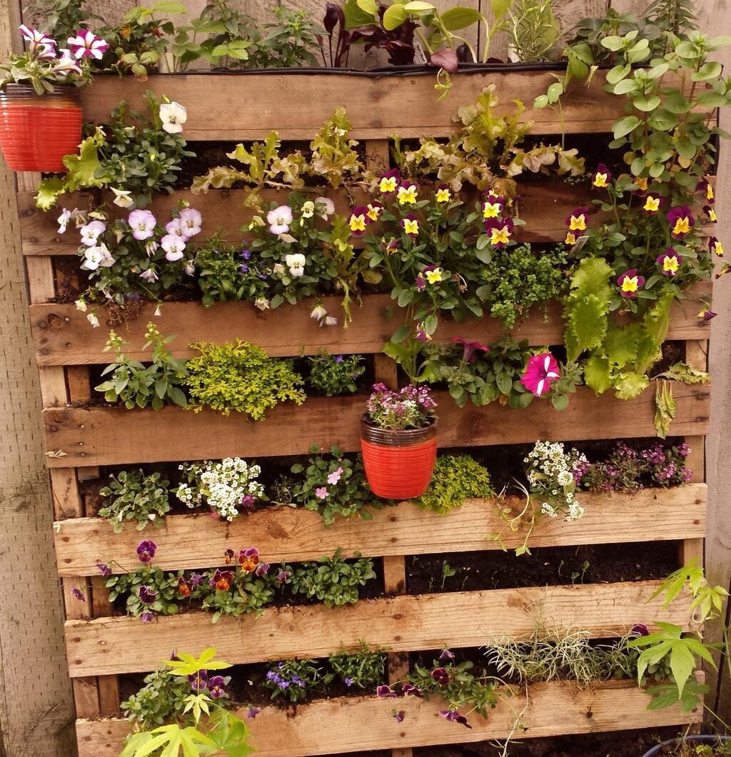 Jennifer\'s garden | Our \