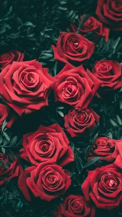 #Roses: Espero rosas de tu parte… http://ift.tt/2GXZsp9