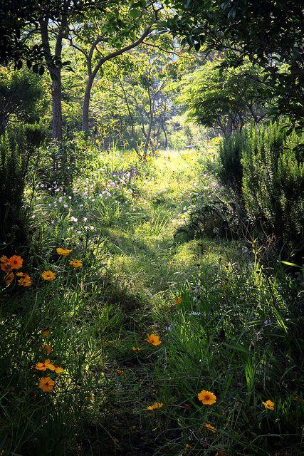 Derriere Le Jardin Sauvage Une Clairiere Ensoleillee A Decouvrir