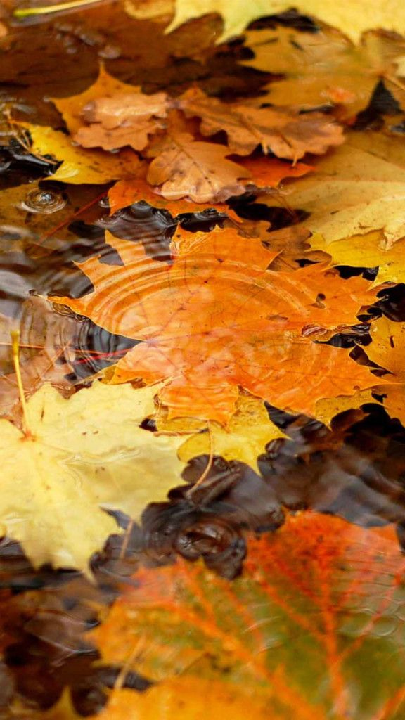Pin By Sharon Adkins On Wallpapers In 2020 Fall Wallpaper Fall Backgrounds Iphone Hd Wallpaper Pattern
