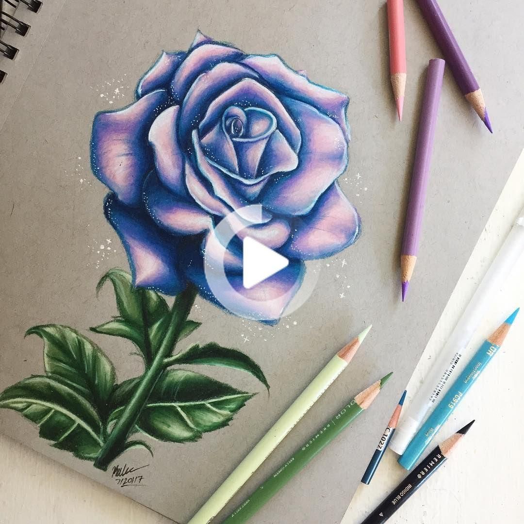 Drawingss On Instagram Hello Everyone Magical Rose Here S This Weird Rose Drawing I In 2020 Rose Drawing Roses Drawing Prismacolor Art