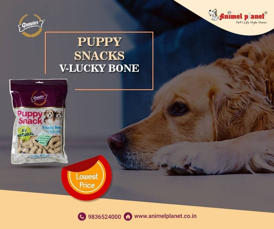 Animel Planet The Best Pet Product Shop In Siliguri Buy The Best Pet Food And Accessories For Your Lovely Pets From The Dog Food Recipes Dogs Pet Shops Store