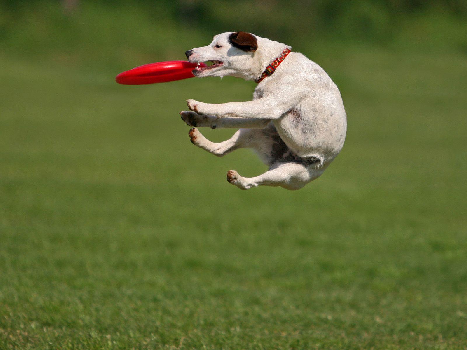 Top 10 Words Of Summer Merriam Webster Com 1 Frisbee Flying Dog