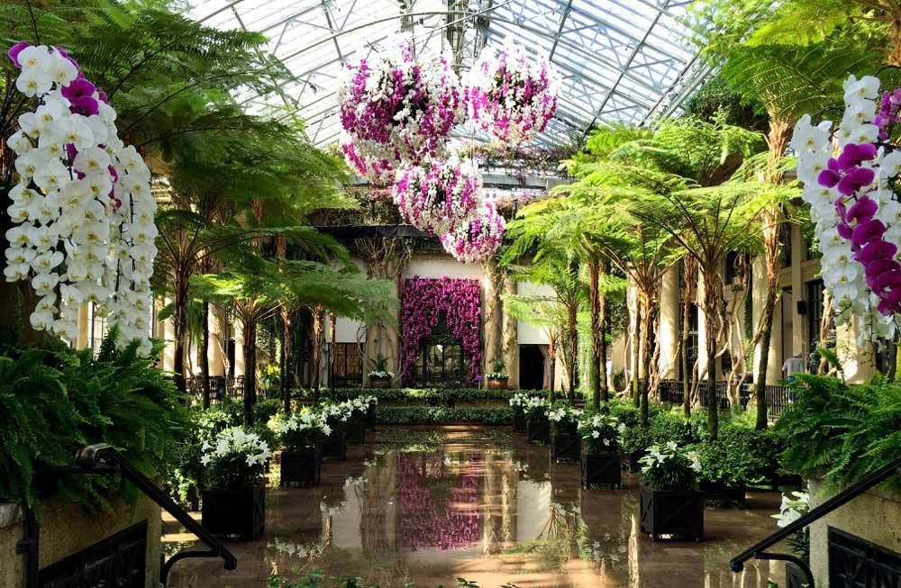 Life archives lisa robertson orchids longwood gardens