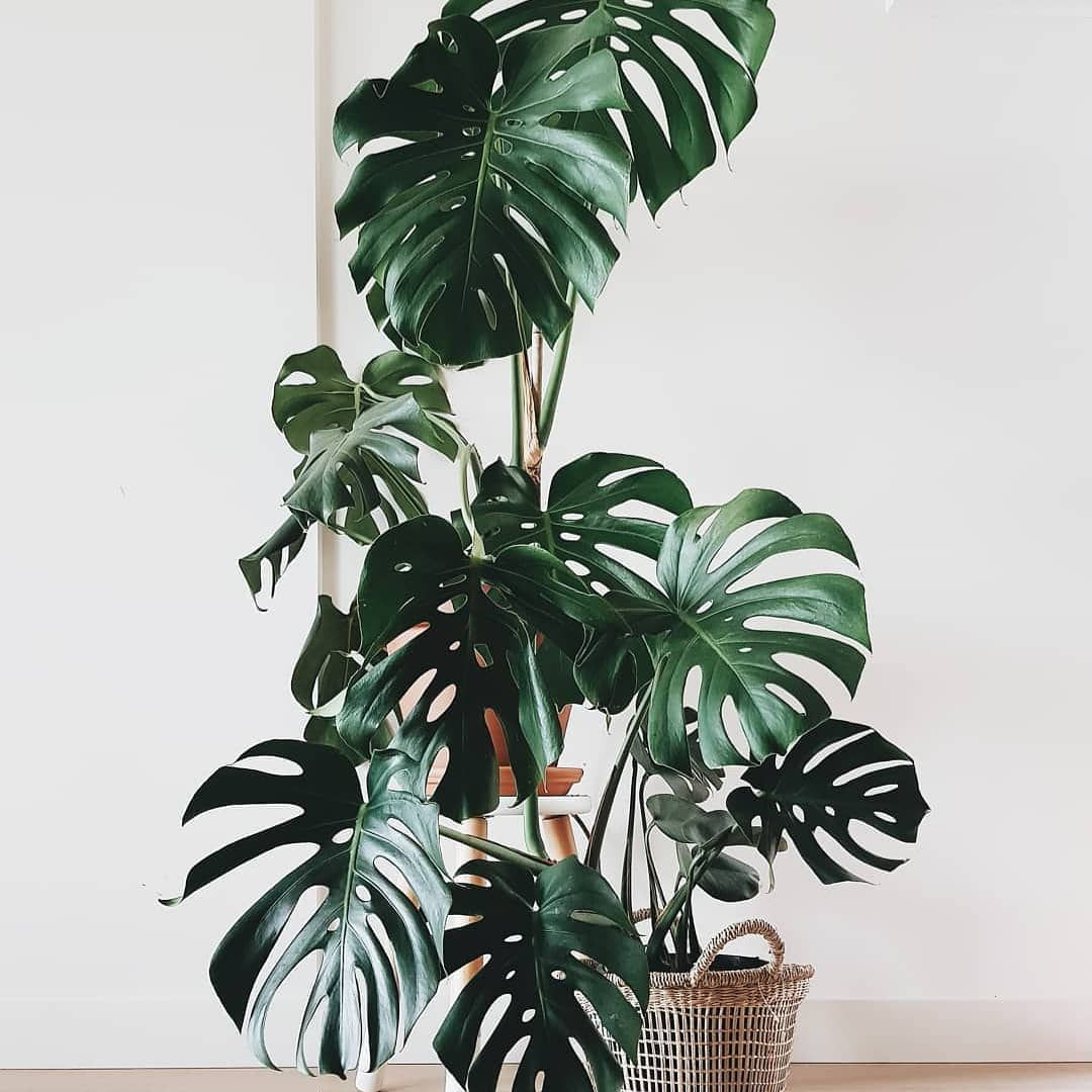 Love your Bunnings indoor plants but need inspiration Here are 20 ...