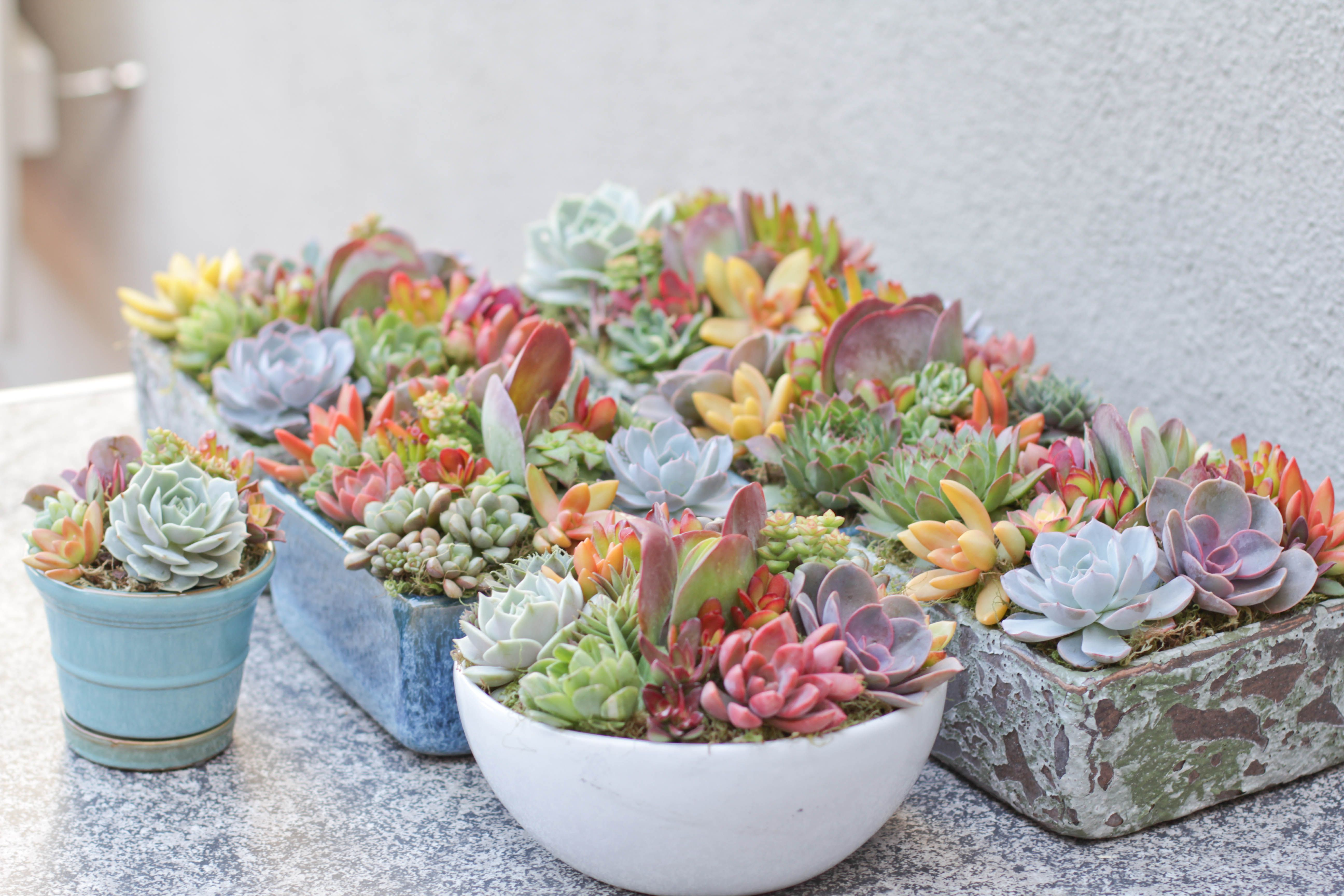 Spring Succulent Arrangements I Love The Colors Of Spring