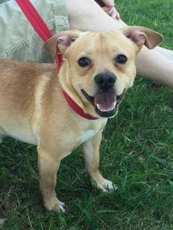 Wichita Falls, TX Mix. Meet Casper, a dog for