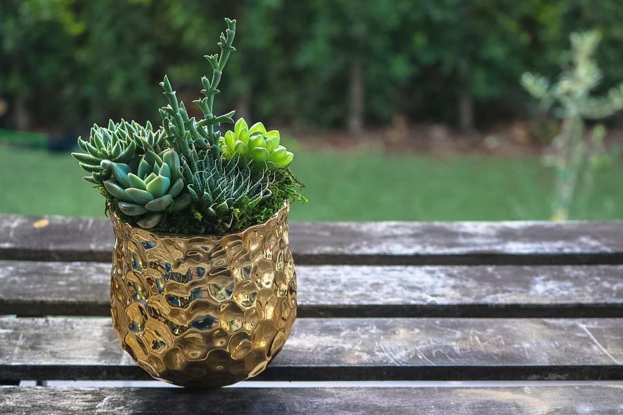 Classic Gold Ceramic Cultiver Succulentes Plantes Grasses