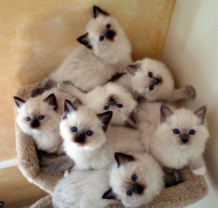 New Funny Cats TOP 52 Funny Cats and Kittens Pics TOP 52 Funny Cats and Kittens Pics | Funny Animals, Funny Cat | DomPict.com 4