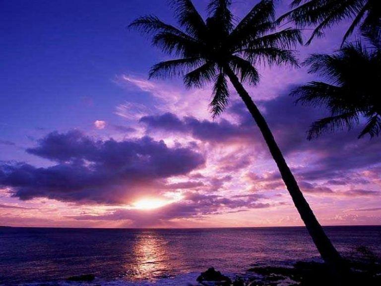 صور خلفيات طبيعية للغروب مناظر روعة 2017 ميكساتك Palm Tree Sunset Sunset Wallpaper Sunset