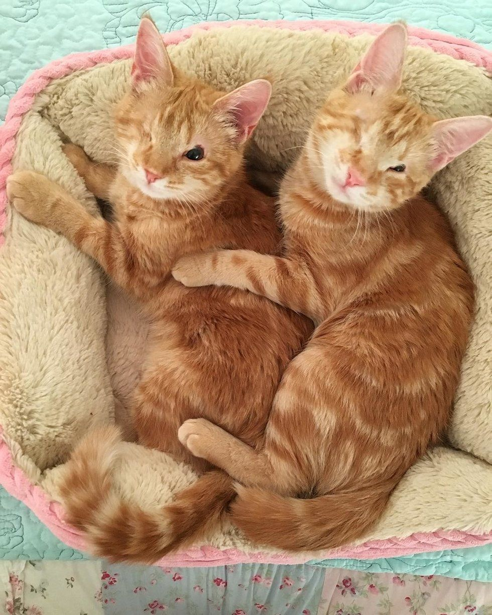 A Good Samaritan Rescued Two Ginger Kittens Born With The Same Eye Condition Along With Their Blind Sister From An Uncer Funny Cute Cats Cats Sleeping Kitten
