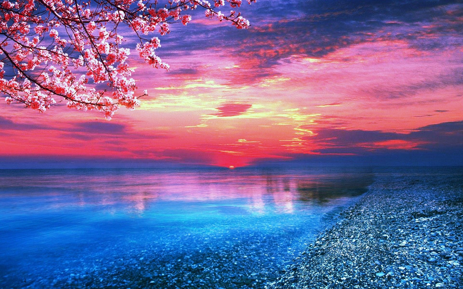 Sun sea trees water pink blue nature samsung wallpapers for 3d wallpaper pink