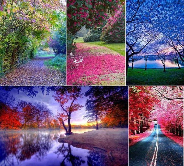 The Various Colours Of Fall