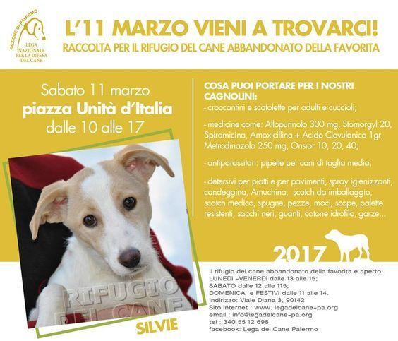 Pappa e farmaci per gli orfanelli de La Favorita: giornata di raccolta a Palermo :http://www.qualazampa.news/event/pappa-e-farmaci-per-gli-orfanelli-de-la-favorita-giornata-di-raccolta-a-palermo-3/